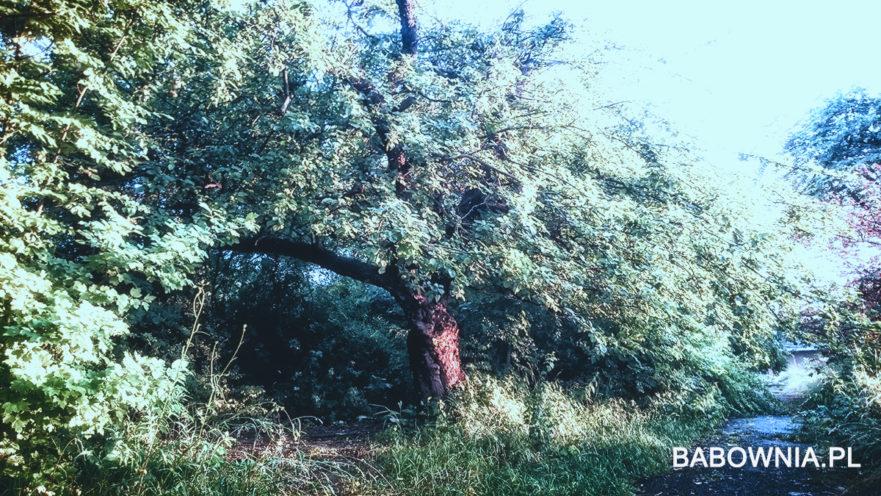 Ogród Babownia